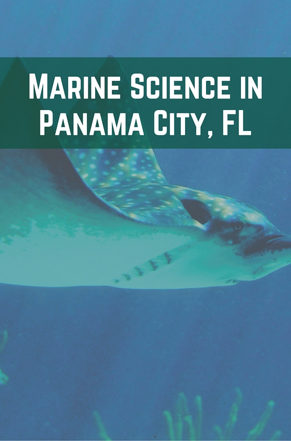 Marine Science in Panama City, FL