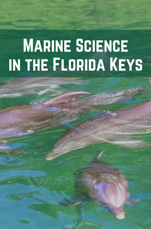 Marine Science in the Florida Keys