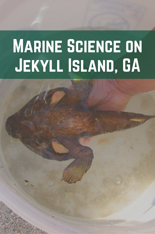 Marine Science on Jekyll Island