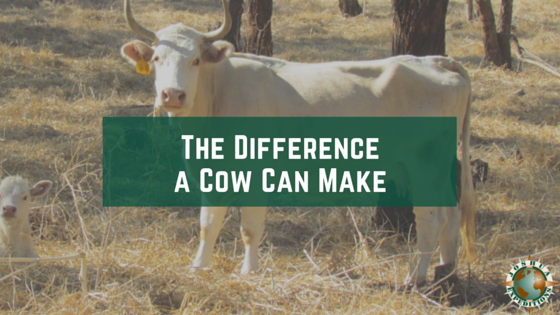 difference a cow can make
